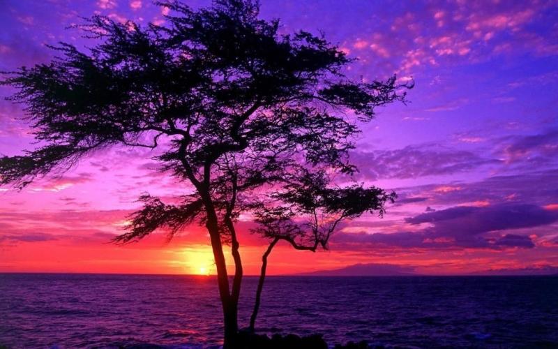 Paysage avec ciel violet