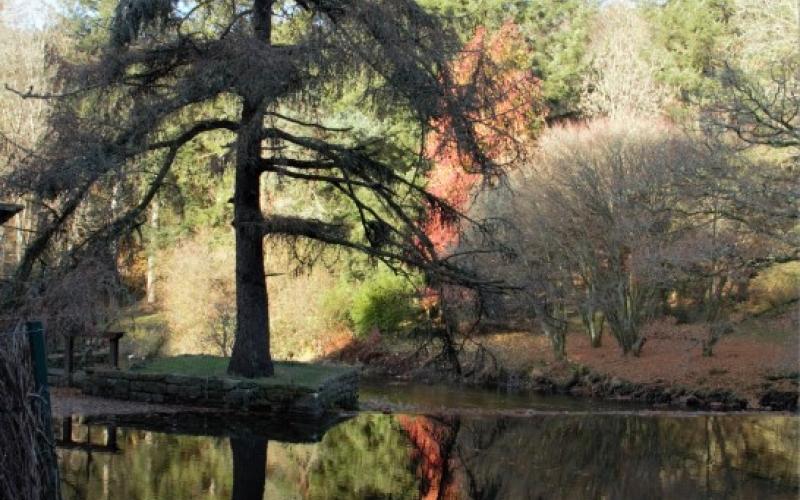 Photo d'un arbre et son reflet dans l'eau